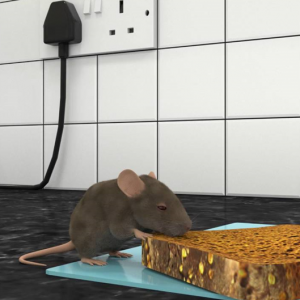 What Is The Best Rat Repellant?