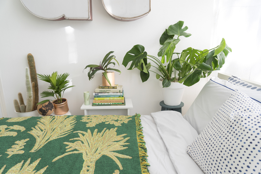 Is it a Safe Idea to Have Plants in the House?